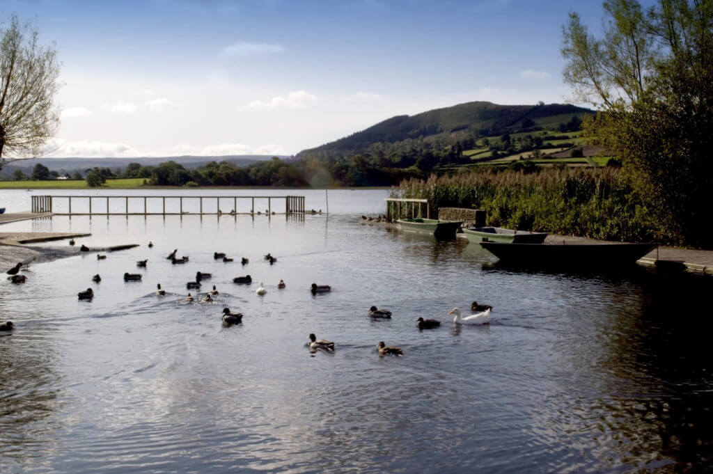 wide variety of birds on Llangorse Lake