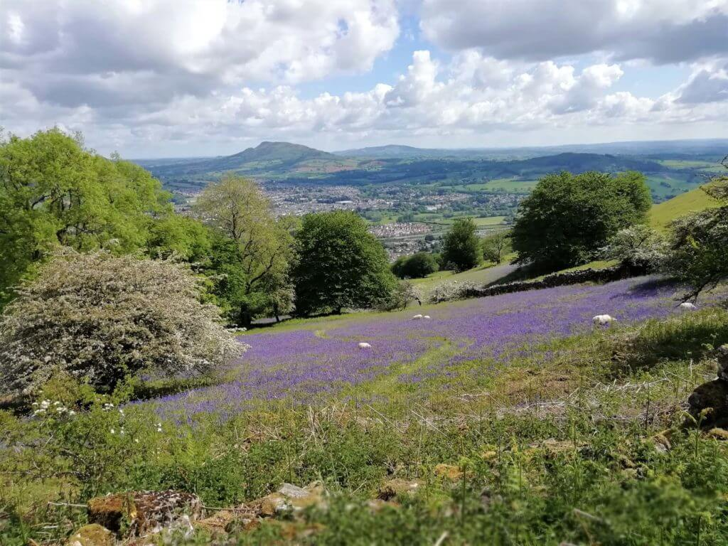 blorenge bluebell fields