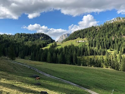 The Road by Malga Vescova on alta via #1 hike