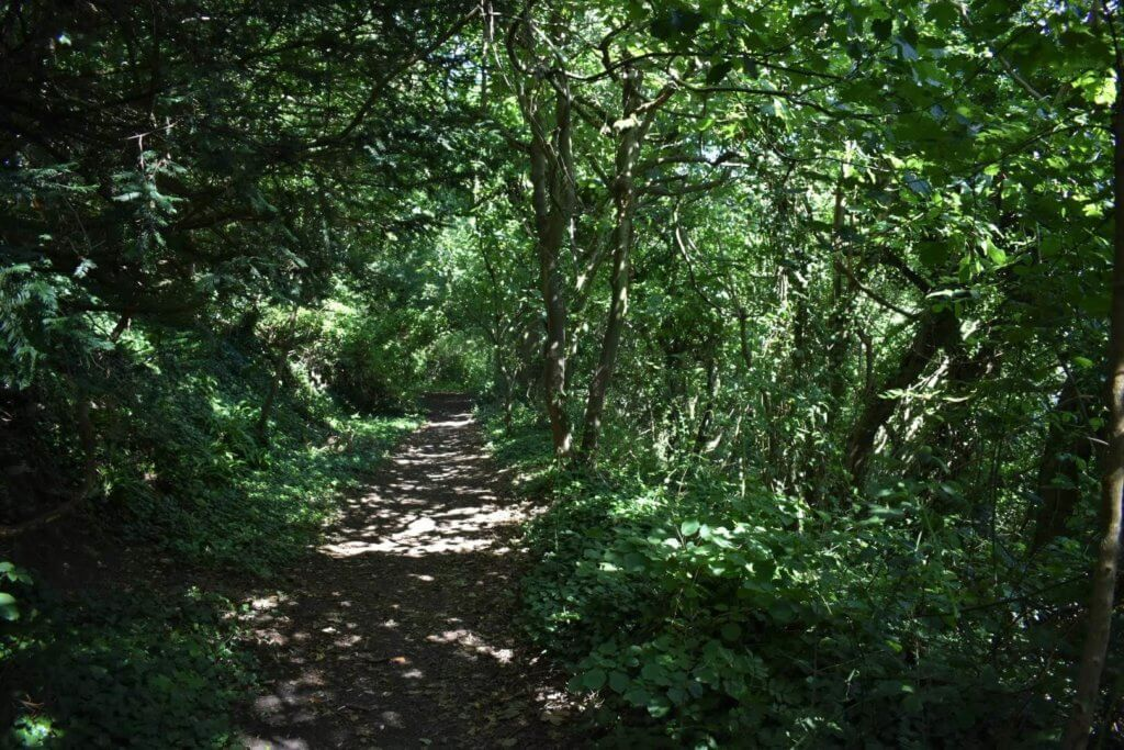 woods leading to porthkerry park