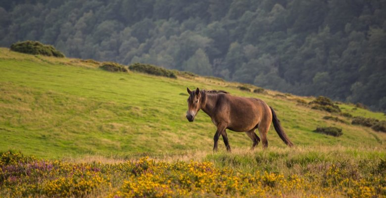 best walks in exmoor