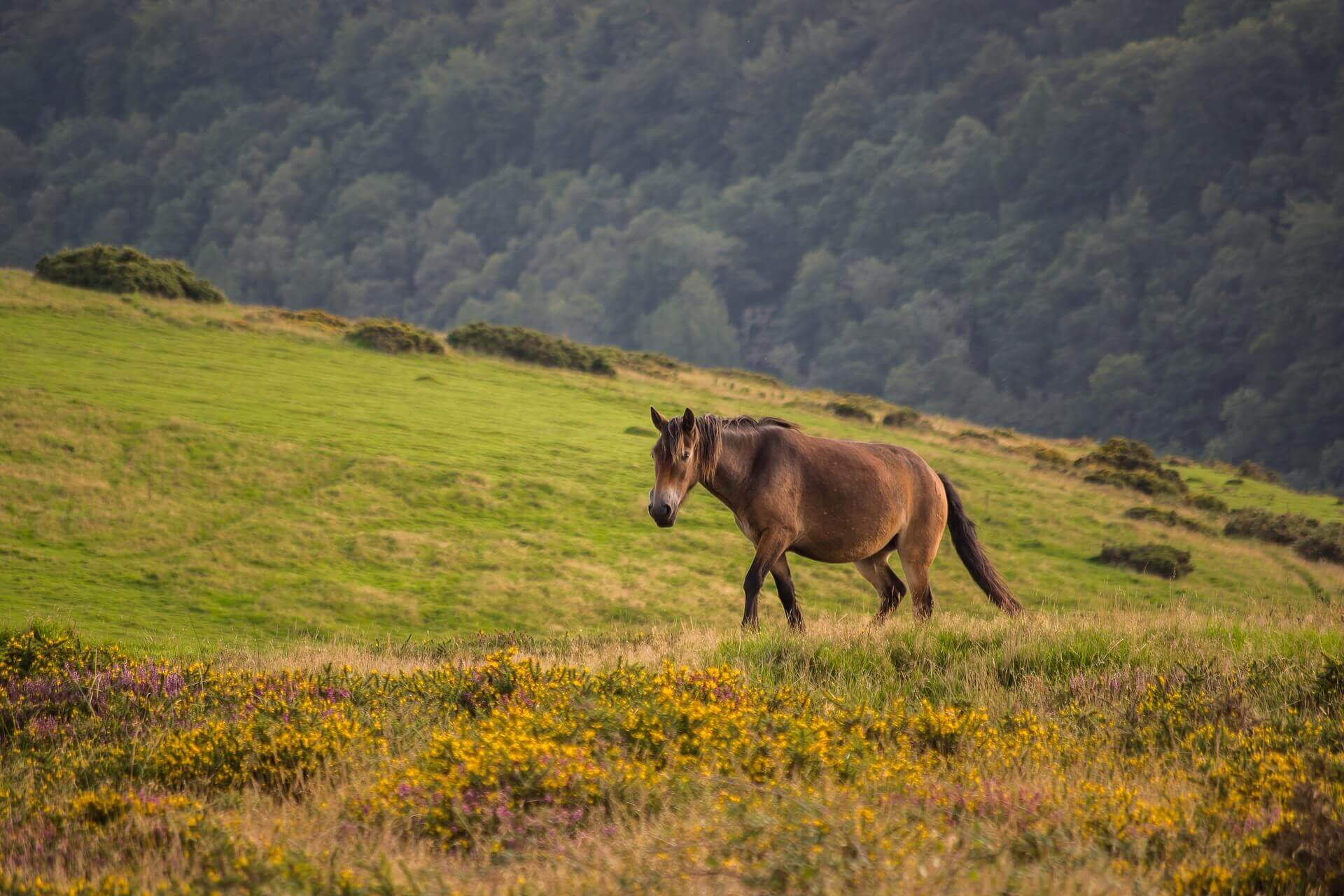 11 Of The Best Walks In Exmoor National Park