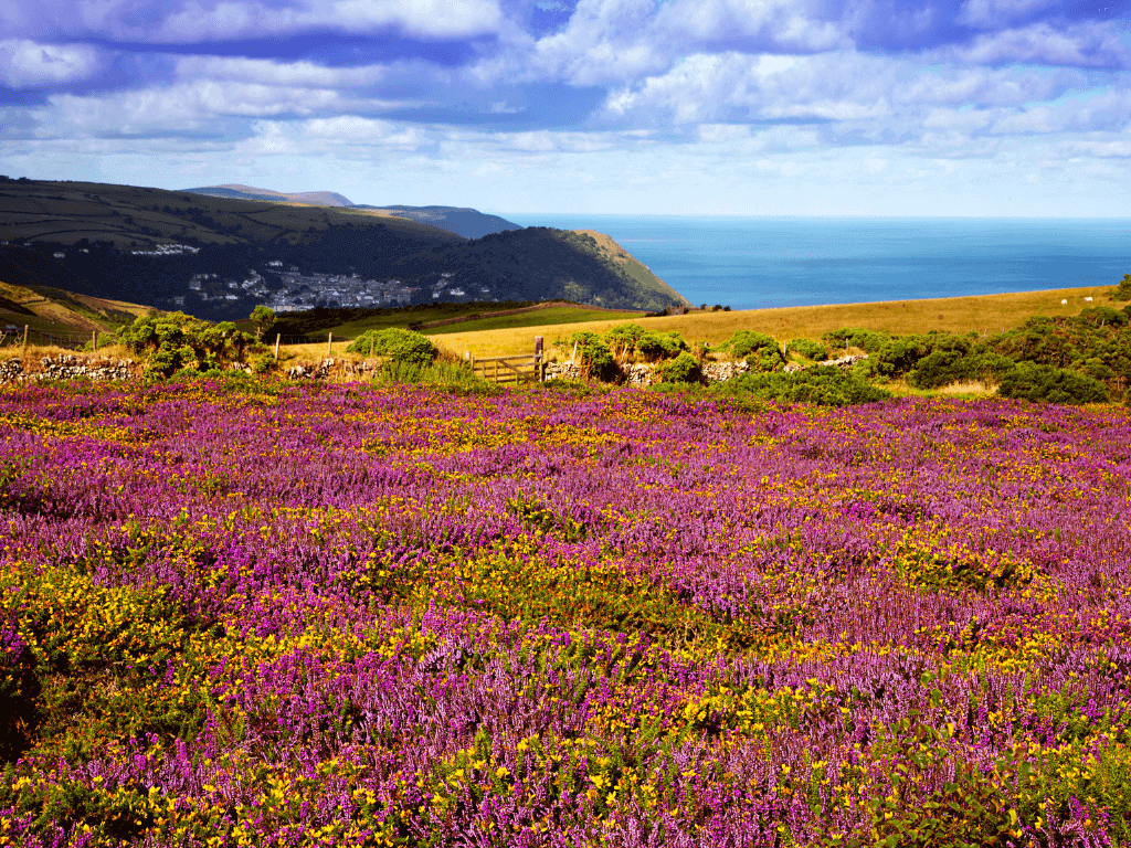 best walks in exmoor national park