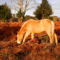 10 of the Best Walks in the New Forest National Park