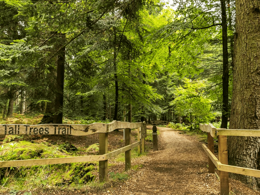 tall trees trail - one of the best walks in the new forest