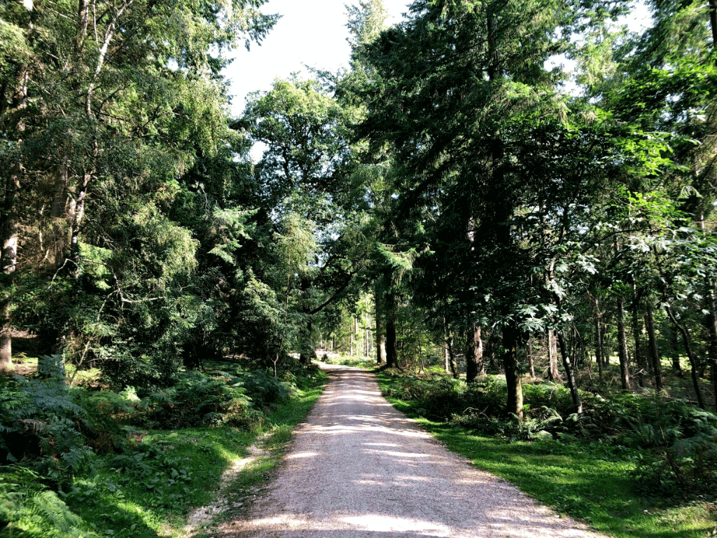 best walks in the new forest - wilverley inclosure walk