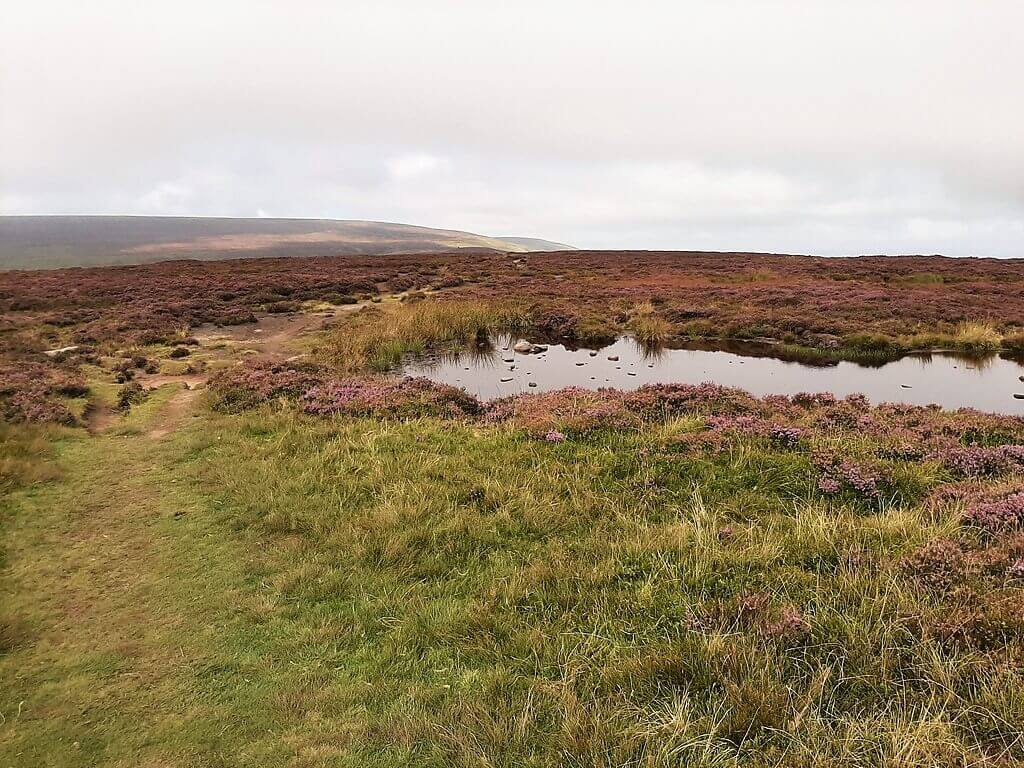 pond at the summit of black hill