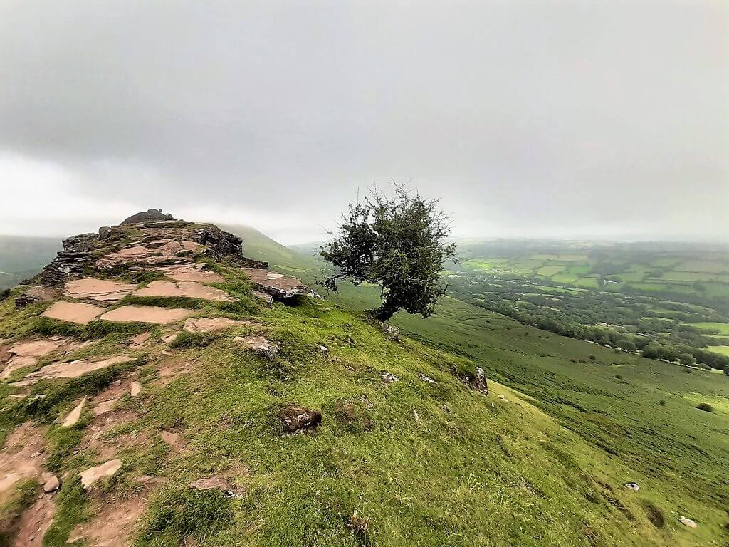small tree growing from black hill ridge