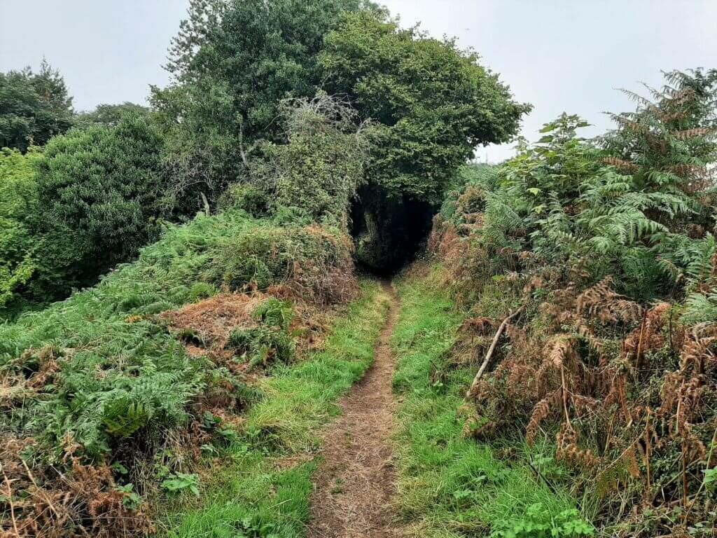 trail to table mountain passes between two hedges on the pen cerrig calch walk